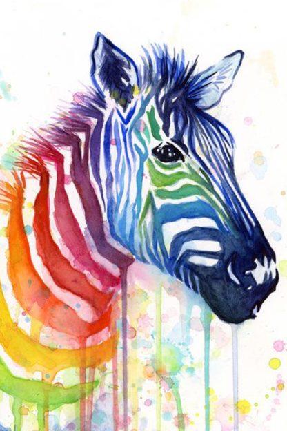 színes csíkozású zebra