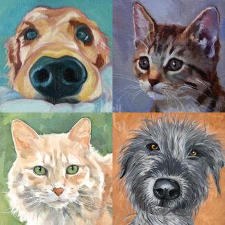 kutya és macska portrék